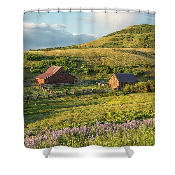 Lupine In The Field Shower Curtain