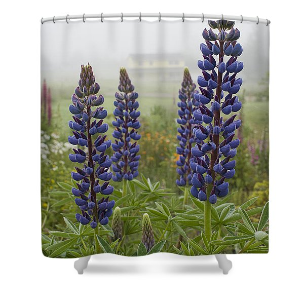 Lupine In The Fog Shower Curtain