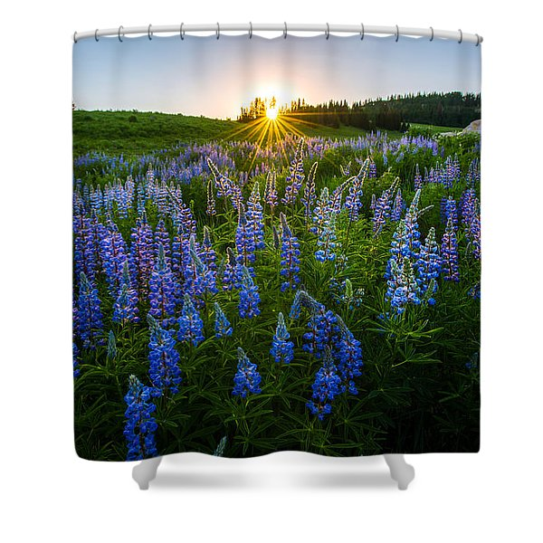 Lupine Meadow Shower Curtain