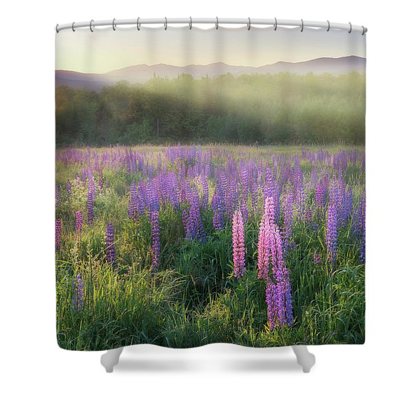 Lupine Morning Fog Square Shower Curtain