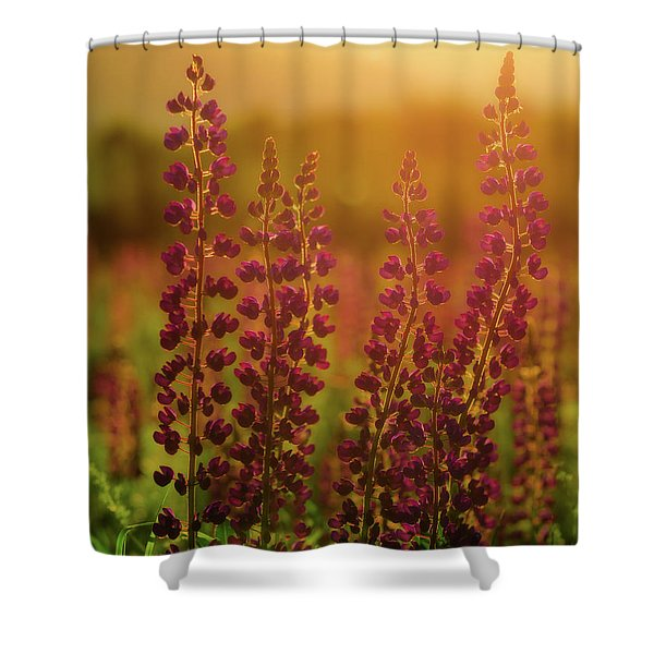 Lupines At Dawn Shower Curtain