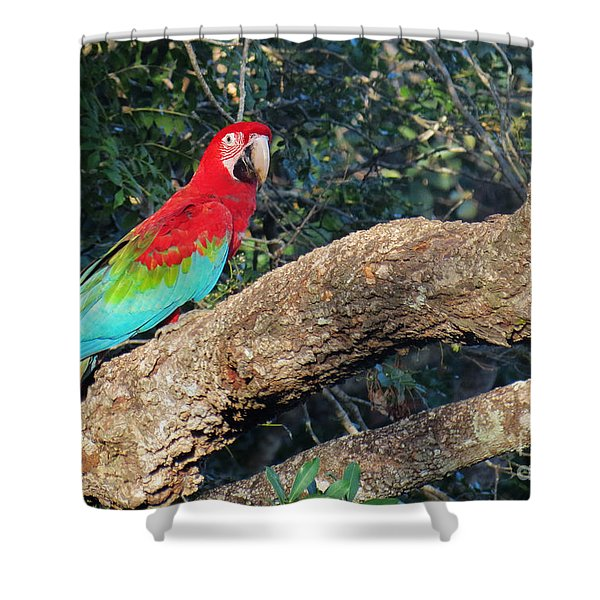 Macaw Resting Shower Curtain