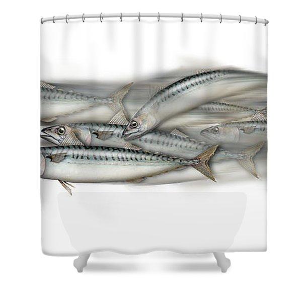 Mackerel School Of Fish - Scomber - Nautical Art - Seafood Art - Marine Art -game Fish Shower Curtain