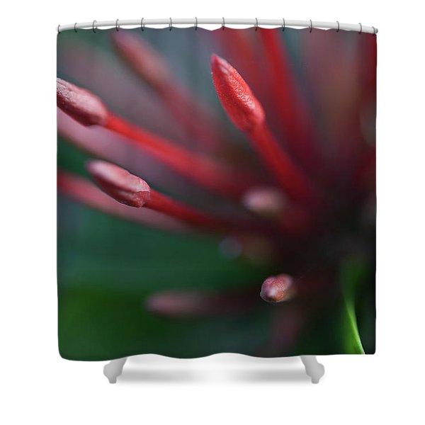 Macro Bloom - 0015 Shower Curtain