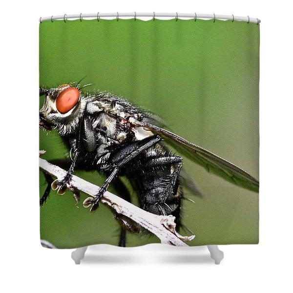 Macro Fly Shower Curtain