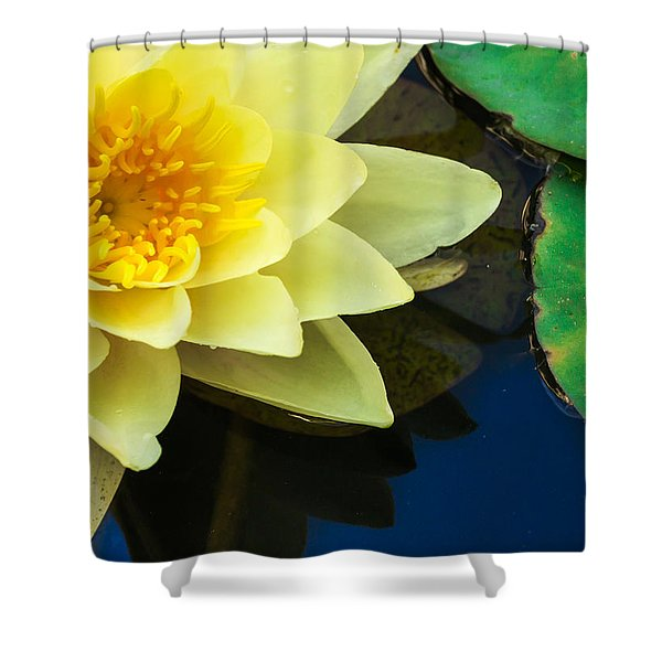 Macro Image Of Yellow Water Lilly Shower Curtain
