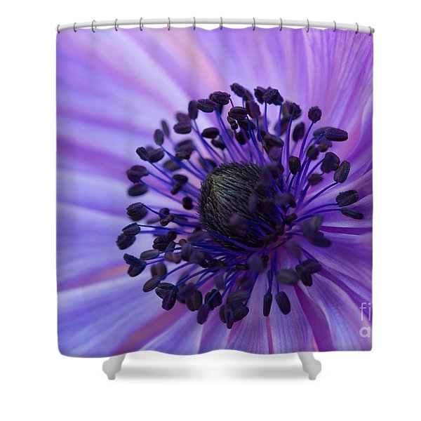 Macro Of Lavender Purple Anemone Shower Curtain