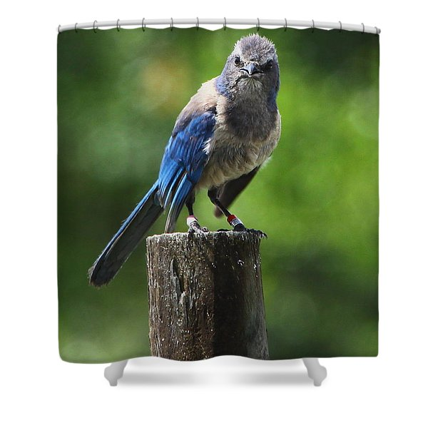 Mad Bird Shower Curtain