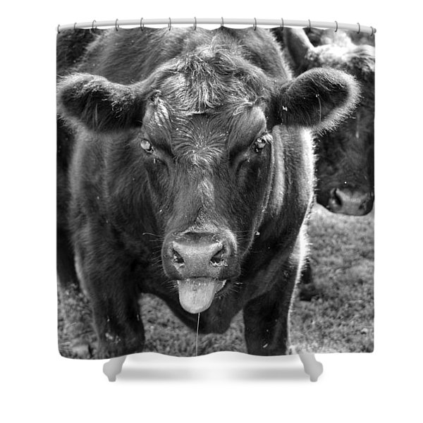 Mad Cow  Shower Curtain