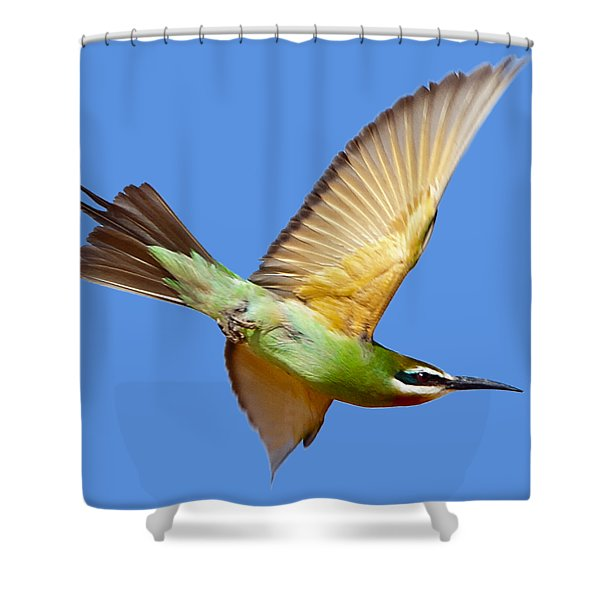 Madagascar Bee-eater T-shirt Shower Curtain