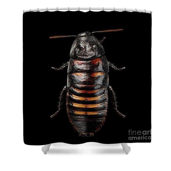Madagascar Hissing Cockroach Shower Curtain