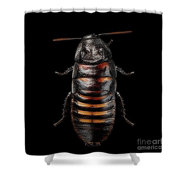 Madagascar Hissing Cockroach Shower Curtain