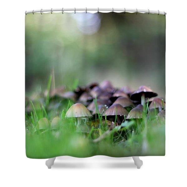Magic Mushrooms 3 Shower Curtain