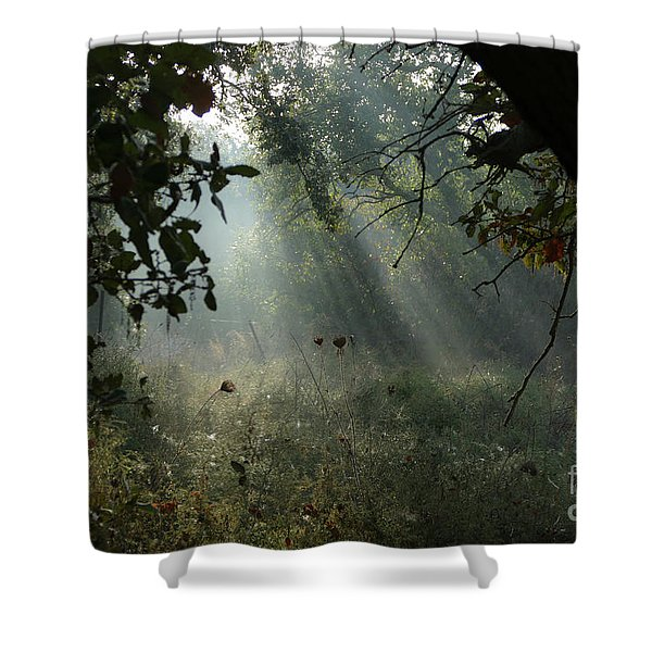Shower Curtain featuring the photograph Magical Woodland Lighting by Arik Baltinester