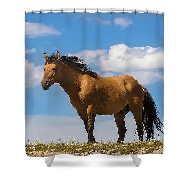 Magnificent Wild Horse Shower Curtain