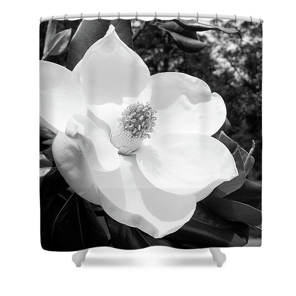 Magnolia Bloom- By Linda Woods Shower Curtain