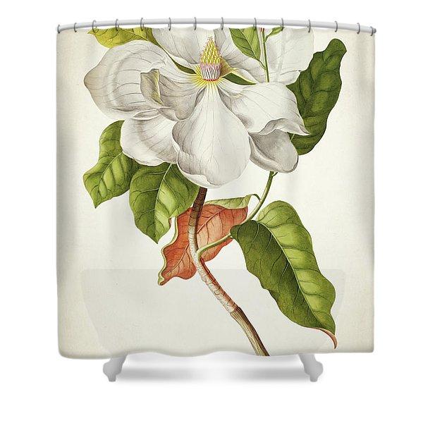 Magnolia Botanical Print Shower Curtain