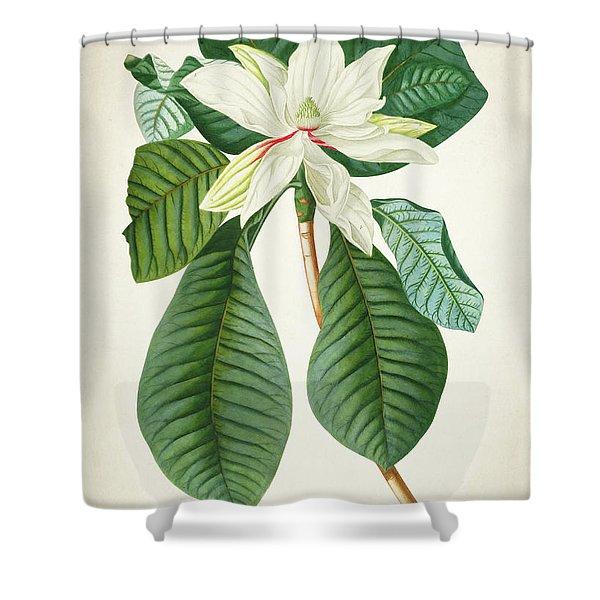 Magnolia Botanical Print Magnolia02 Shower Curtain