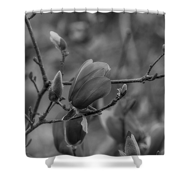 Magnolia Bw Blooms Buds Branches Shower Curtain