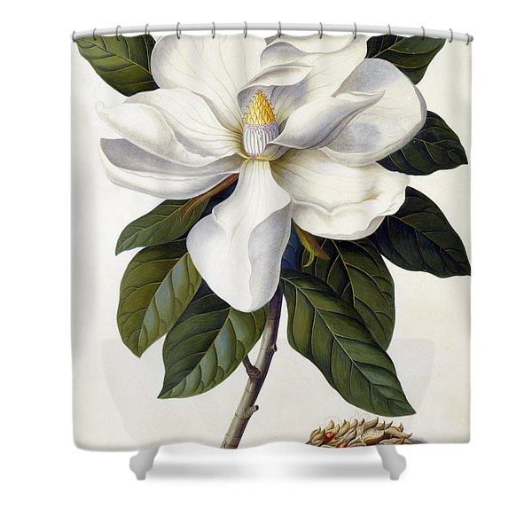 Magnolia Grandiflora Shower Curtain