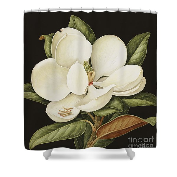 Magnolia Grandiflora Shower Curtain