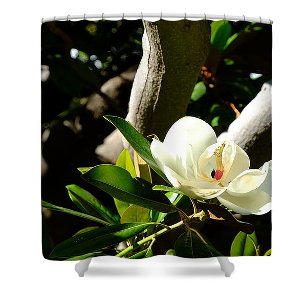 Magnolia Nest Shower Curtain