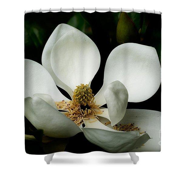 Magnolia Time Shower Curtain