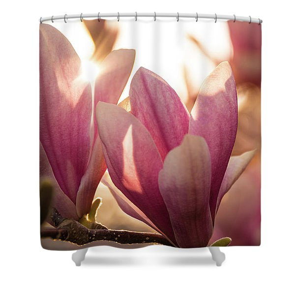 Magnolias At Sunset Shower Curtain
