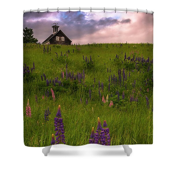 Shower Curtain featuring the photograph Maine Lupines And Home After Rain And Storm by Ranjay Mitra