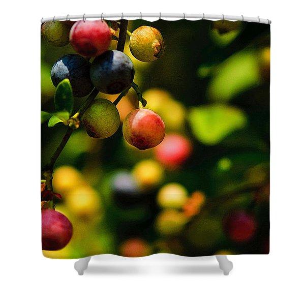 Making Blueberries Shower Curtain