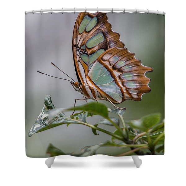 Malachite Butterfly Profile Shower Curtain