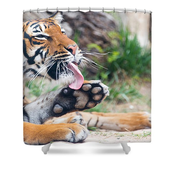 Malayan Tiger Grooming Shower Curtain