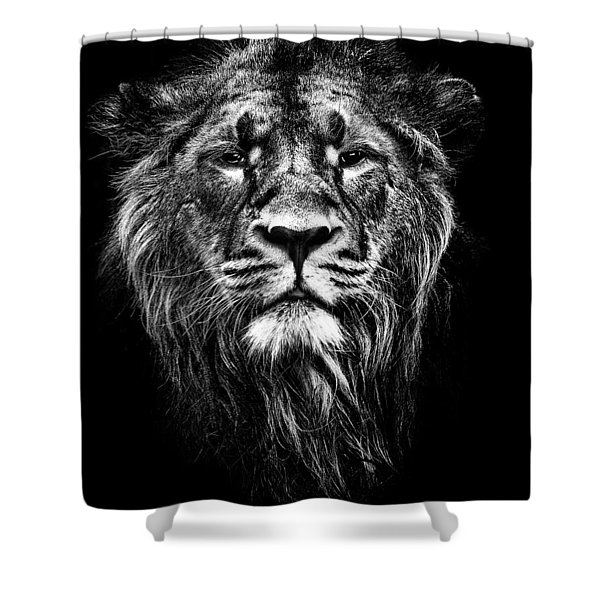 Male Asiatic Lion Shower Curtain