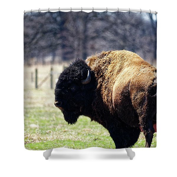 Male Bison Shower Curtain