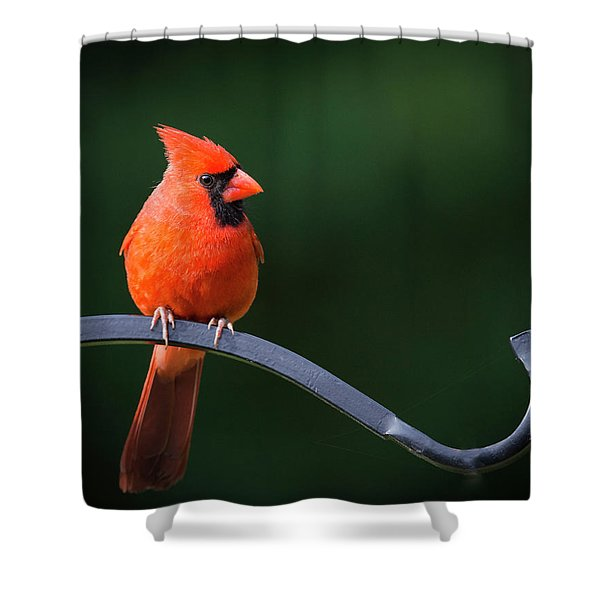 Male Cardinal At The Feeder Shower Curtain
