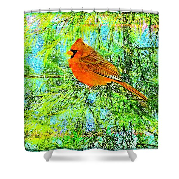 Male Cardinal In Juniper Tree Shower Curtain
