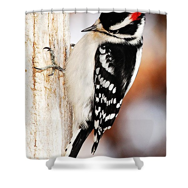 Male Downy Woodpecker 3 Shower Curtain