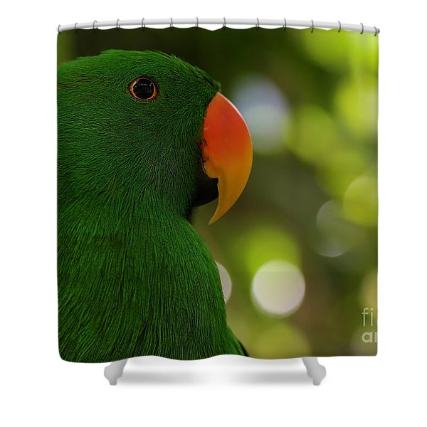 Male Eclectus Parrot Shower Curtain