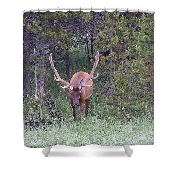Bull Elk Rmnp Co Shower Curtain