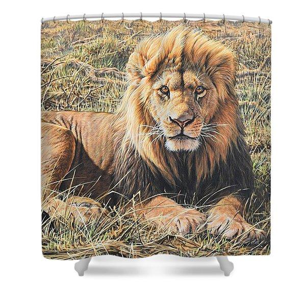 Male Lion Portrait Shower Curtain