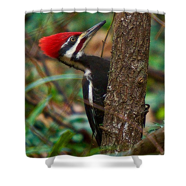 Shower Curtain featuring the photograph Male Pileated Woodpecker by Robert L Jackson