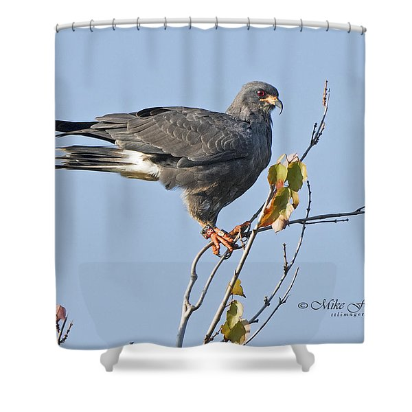 Male Snail Kite Poses Shower Curtain