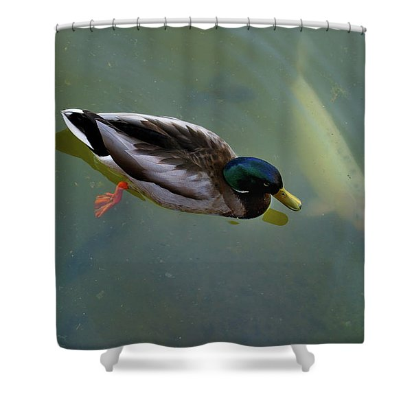 Mallard And Carp Shower Curtain