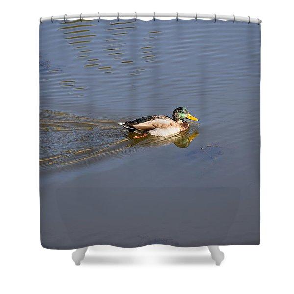 Mallard Duck Burgess Res Co Shower Curtain