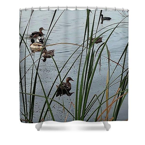 Mallard Migration Shower Curtain