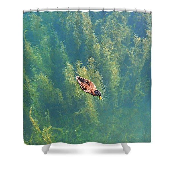 Mallard Over Seaweed Shower Curtain