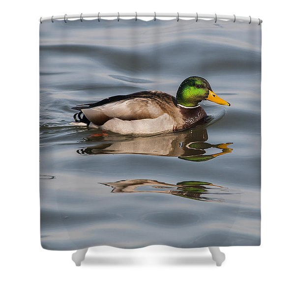 Mallards And Reflection Shower Curtain