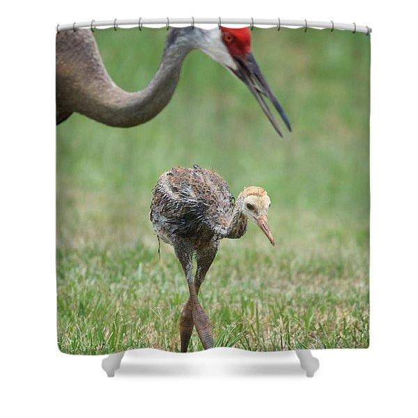 Mama And Juvenile Sandhill Crane Shower Curtain