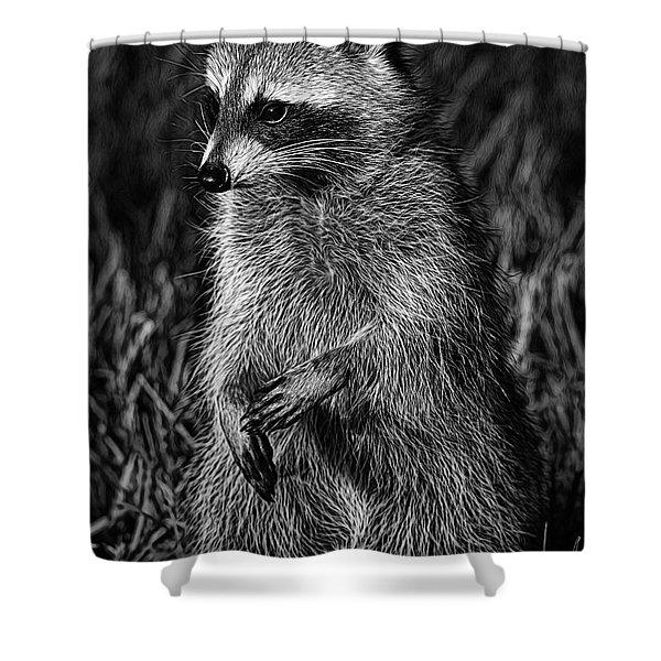 Mama Raccoon Shower Curtain