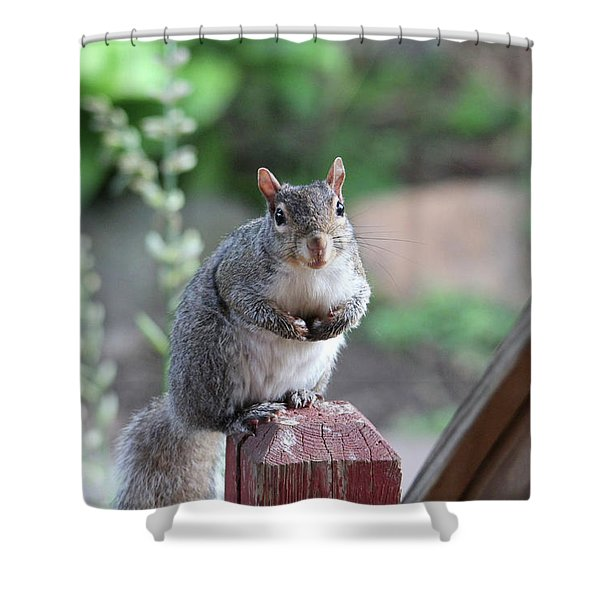 Mama Squirrel Shower Curtain